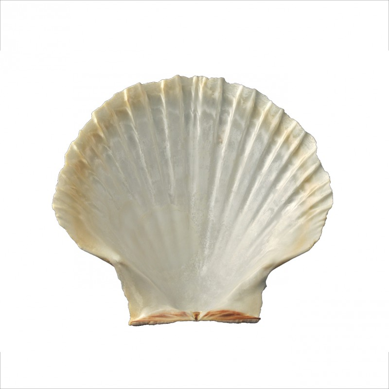 Coquille Saint Jacques Related Keywords & Suggestions - Coquille Saint ...